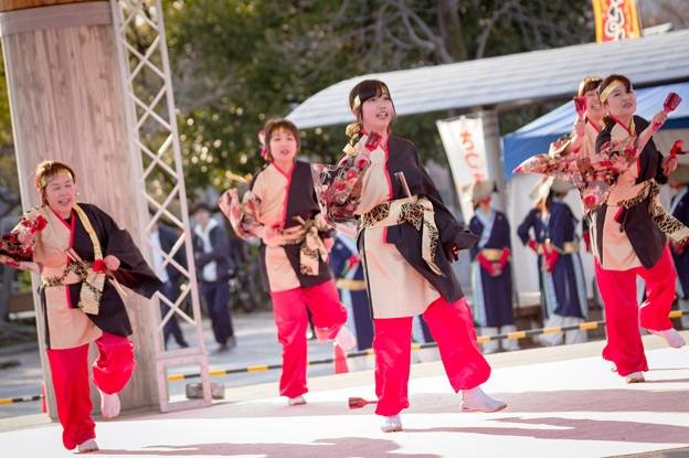 京都さくらよさこい2017 京都八木よさこい