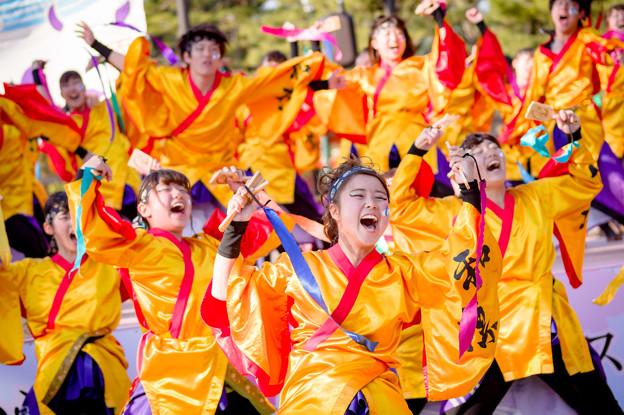京都さくらよさこい2017 大阪教育大学YOSAKOIソーランサークル凛憧
