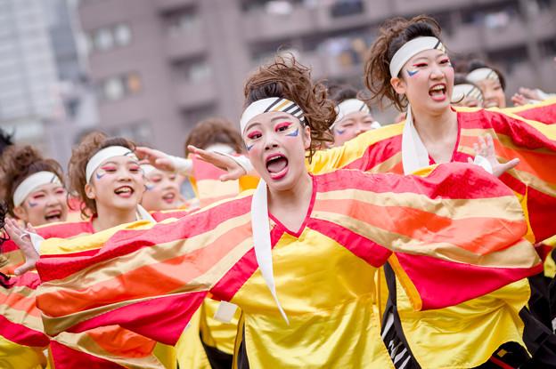 どまつり夜桜in岡崎2017 名古屋学生チーム「鯱」