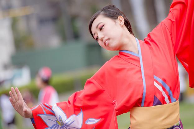 どまつり夜桜in岡崎2017 でらおおぶ
