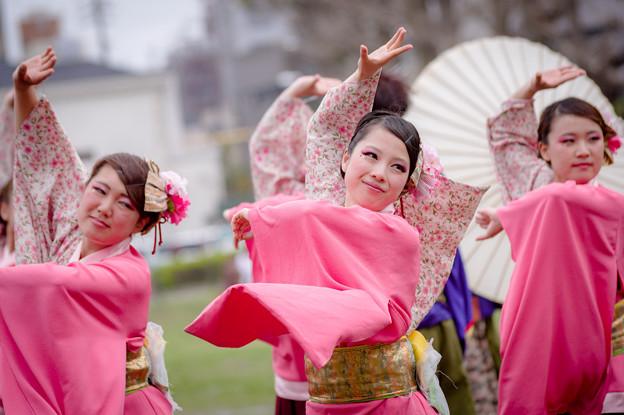 どまつり夜桜in岡崎2017 常笑