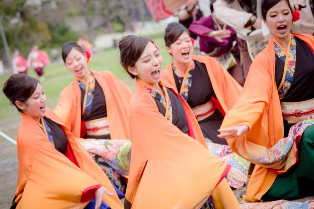 どまつり夜桜in岡崎2017 kagura
