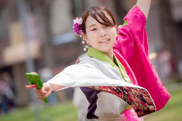 どまつり夜桜in岡崎2017 桜