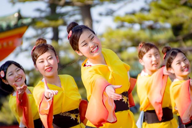 京都さくらよさこい2017 京炎そでふれ!華羅紅