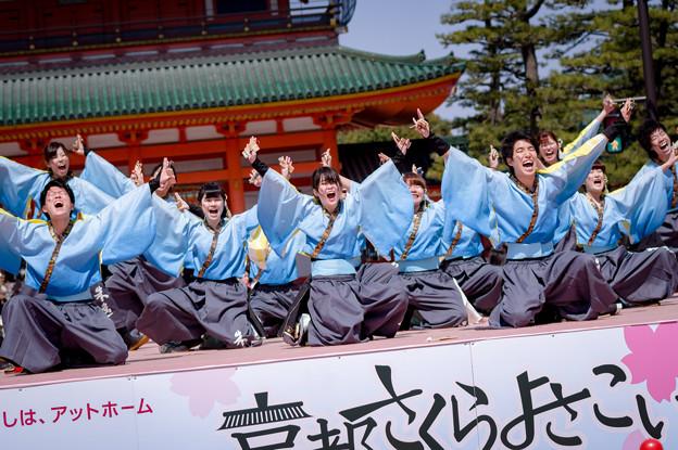 京都さくらよさこい2017 京炎そでふれ!京躍華