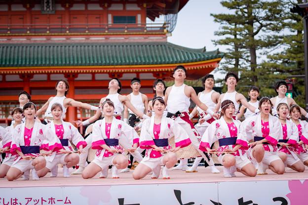 京都さくらよさこい2017 絆百祭
