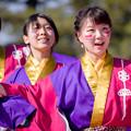 """写真: 京都さくらよさこい2017 仁愛大学""""我楽"""""""