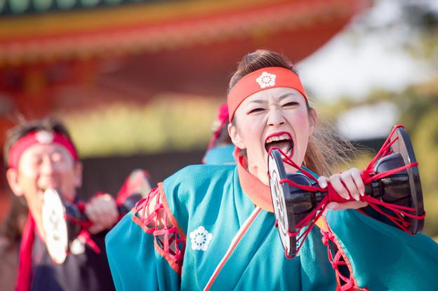 京都さくらよさこい2017 金澤こまち