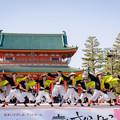 写真: 京都さくらよさこい2017 結