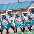 写真: 賤岳春乱舞2017 近江笑人