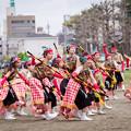どまつり夜桜in岡崎2017 AAA瑞穂