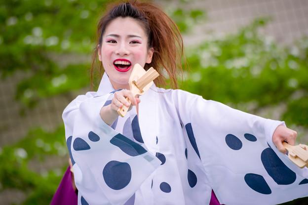 踊っこまつり2017 宍粟牛っとまつりPR隊