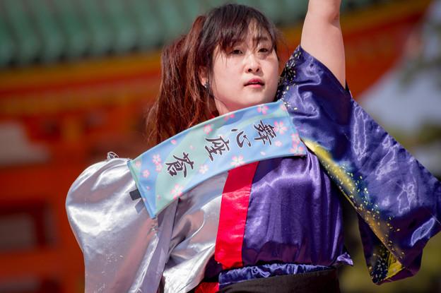京都さくらよさこい2017 舞心座 蒼