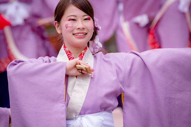 京都さくらよさこい2017 京炎 そでふれ!Tacchi