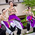 踊っこまつり2017 クラーク高校「百花繚乱」