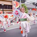 写真: 踊っこまつり2017 若狭踊り屋祭わ衆