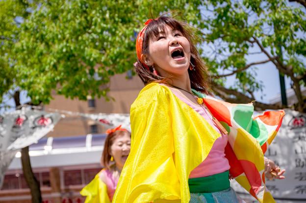 犬山踊芸祭2017 飛燕-多治見