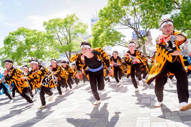 犬山踊芸祭2017 嘉們-KAMON-