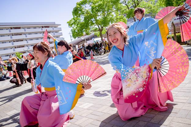 犬山踊芸祭2017 志響~sikyou~