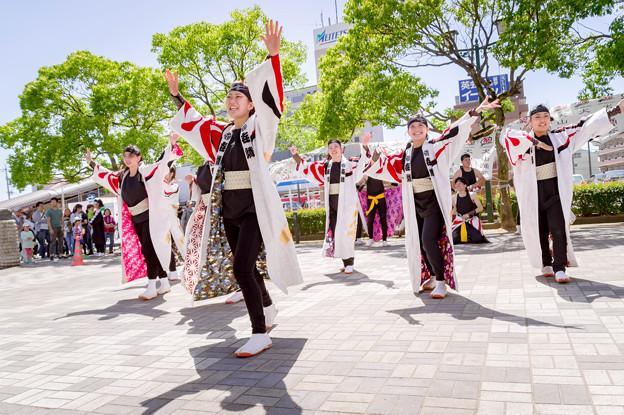 犬山踊芸祭2017 ?燐