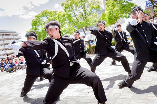 犬山踊芸祭2017 青春応援団 我無沙羅