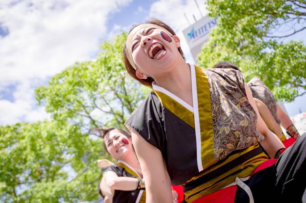 犬山踊芸祭2017 櫛形ファイヤーズ