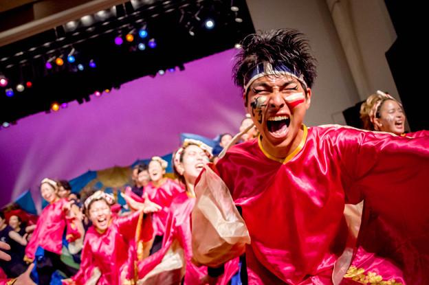 堺よさこいかえる祭り2017 神戸学生よさこいチーム湊