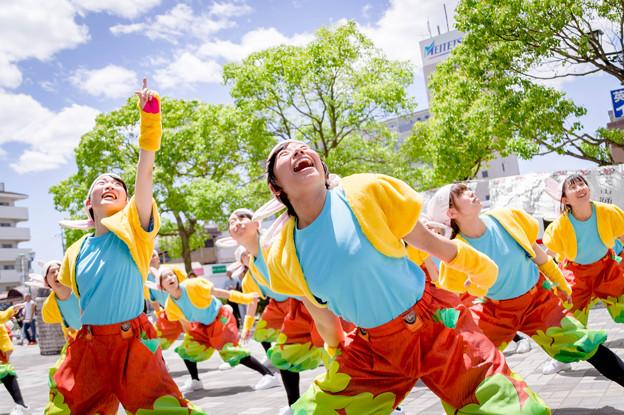 犬山踊芸祭2017 歓喜団