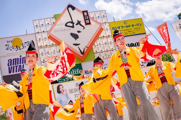 よさこい全国大会2017 京町・新京橋「ゑびすしばてん連」