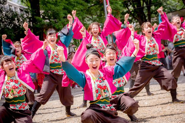 にっぽんど真ん中祭り2017 宮城学院女子大学よさこい部 Posso ballare?MG