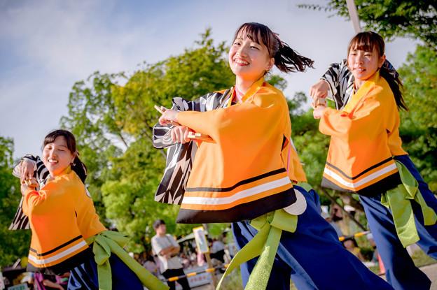 こいや祭り2017 桃山学院大学よさこい連「真輝 SANAGI-」