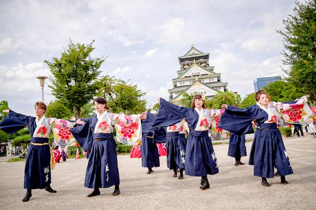 こいや祭り2017 滋賀大学よさこいサークル椛