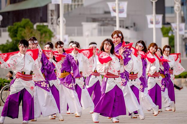 神戸アライブ2017 ふくこい連