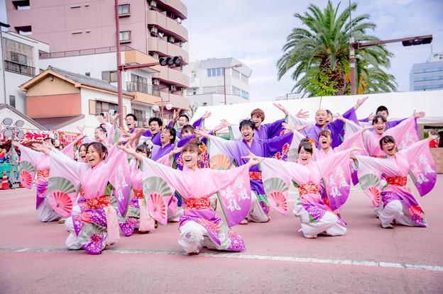 写真: 安濃津よさこい2017 春の風咲き乱れ