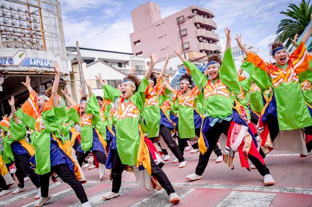 安濃津よさこい2017 名古屋学生チーム『鯱』