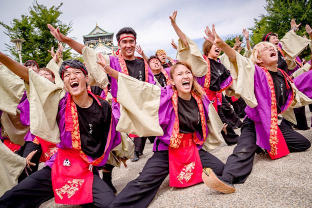 こいや祭り2017 佛教大学よさこいサークル紫踊屋