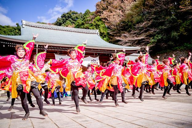 龍馬よさこい2017 愛知淑徳大学よさこい探究会「鳴踊」
