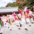 Photos: 龍馬よさこい2017 岡山うらじゃ連 四季