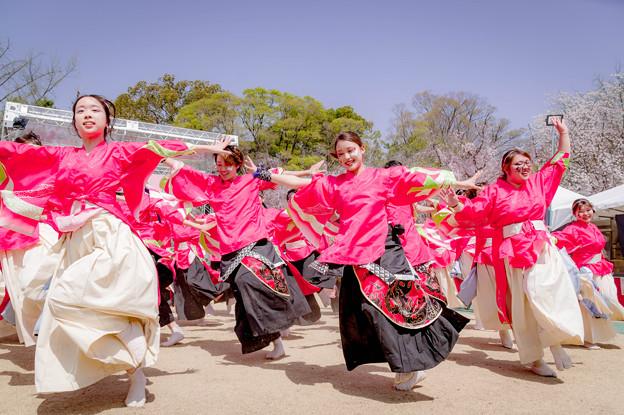 京都さくらよさこい2018 京炎そでふれ! 志舞踊