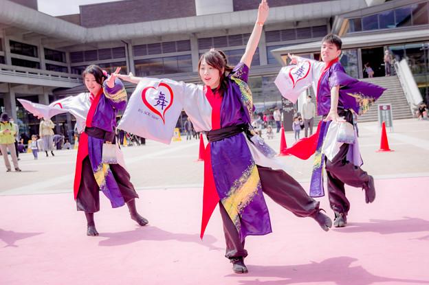 京都さくらよさこい2018 舞心座 蒼