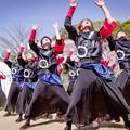 京都さくらよさこい2018 うらじゃ踊り連 楓