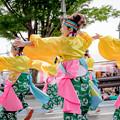 Photos: よさこいinおいでん祭2018 SPICE!