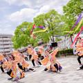 犬山踊芸祭2018 長野県看護大学よさこいサークル鼓魂