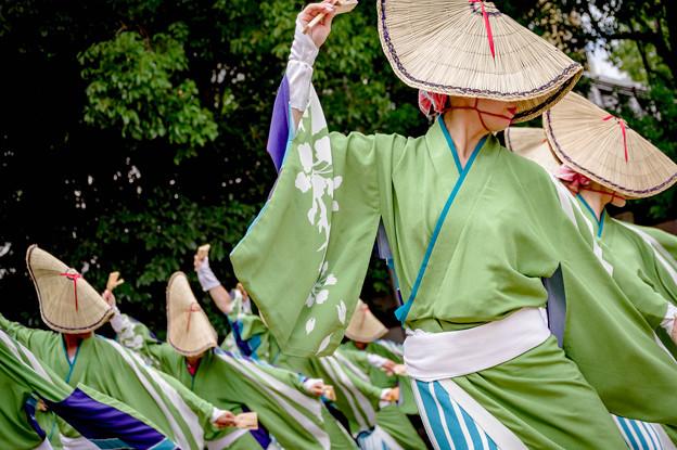 にっぽんど真ん中祭り2018 No Styles