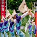 Photos: にっぽんど真ん中祭り2018 No Styles