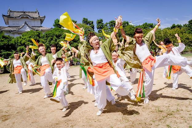 にっぽんど真ん中祭り2018 SAIKA - 菜花 -