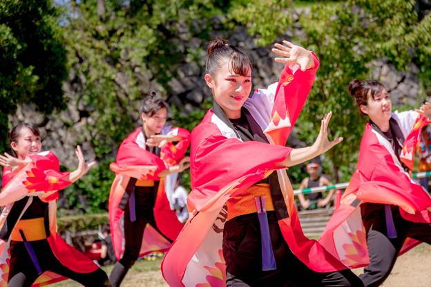 にっぽんど真ん中祭り2018 愛知江南短期大学よさこいサークル飛鳥