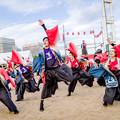 "Photos: こいや祭り2018 小樽商科大学""翔楽舞"""