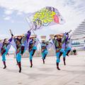 神戸アライブ2018 よさこい踊り屋『菊頭』