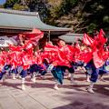 写真: 龍馬よさこい2018 龍谷大学華舞龍